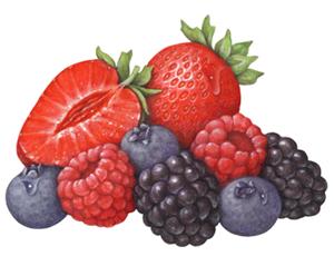 Domestic Fruit Illustration Portfolio