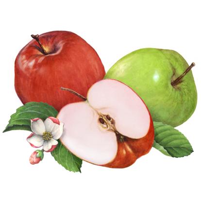 th-domestic fruit
