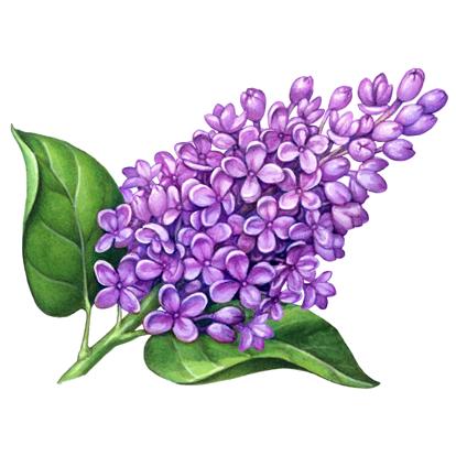 th-flowers