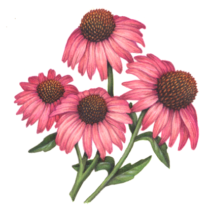 th-medicinal & fragrance herbs