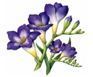 Botanical Portfolio