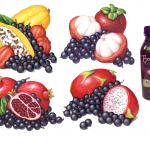 Bolthouse Farms exotic fruit illustrations of acai berries, mangostein, pomegranate, cacao and dragon fruit.