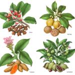 Herbs and spices including cloves, nutmeg, turmeric, and cardamom