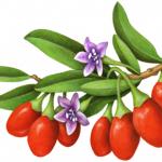 Red Goji berries branch with purple flowers