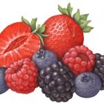 Berries, Strawberries, Blueberries, Blackberries and Raspberries