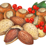 Still life of Christmas nuts with almonds, hazelnuts and holly