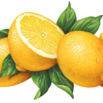Three whole lemons with one cut lemon half and leaves