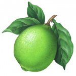 Botanical illustration of a lime with leaves.