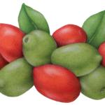 Red and green Cerignola Olives