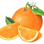 Orange illustration with two slices and leaf with blossom on top.