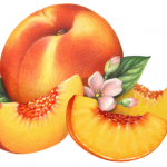 Whole peach with three peach slices, leaves and blossoms