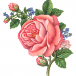 Old-fashioned Victorian style rose bouquet with one large pink rose, three buds and blue flowers