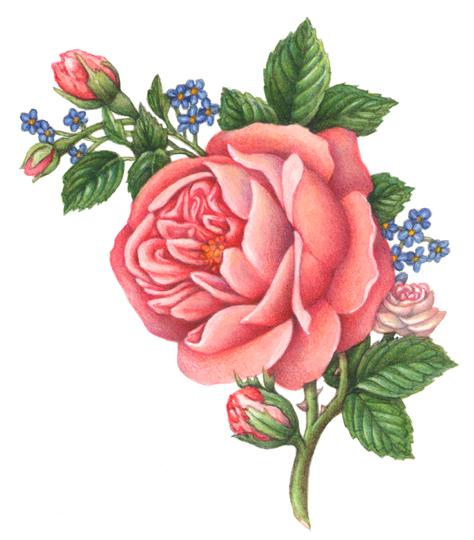 Резултат слика за rose flower png