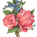 Old-fashioned Victorian style rose bouquet with two pink roses and blue flowers