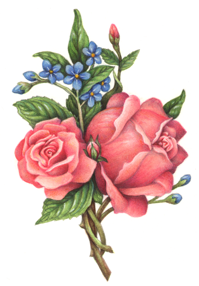 Flowers stock art illustrations douglas schneider illustration old fashioned victorian style rose bouquet with two pink roses and blue flowers mightylinksfo