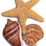 Watercolor illustration of shells and a starfish