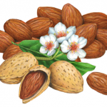 Almond still life with almonds, with shells and shelled, plus half opened almond and leaf with blossoms