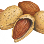 Almond still life with almonds, with shells and shelled, plus half opened almond