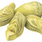 Four marinated artichoke quarters