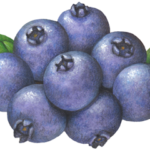 Eight blueberries with leaves