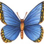 Watercolor illustration of a blue butterfly