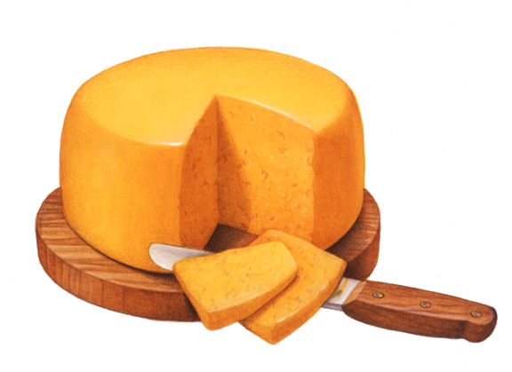 Giant wheel of cheese