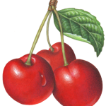 Three red cherries on stems with a leaf
