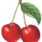 Two red cherries with stems and a leaf