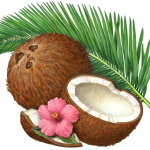 Coconut still life with whole coconut, coconut half, coconut piece, a palm branch and a pink hibiscus