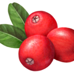 Three whole cranberries with two leaves.