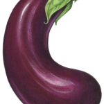 Purple eggplant in a C shape