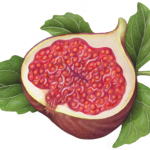 Cut half fig with leaves