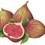 Three figs and a cut half with leaves