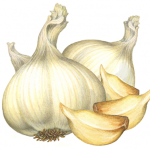 Two whole garlic heads and three garlic cloves
