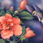 Anna's Hummingbird and pink hibiscus