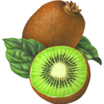 A whole kiwi fruit with a cut half kiwi and leaves.