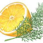 Cut lemon half with a sprig of dill