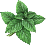 Sprig of mint with ten leaves
