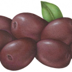 Seven purple Alfonso olives