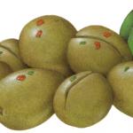 California Sacilian green cracked olives