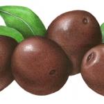Greek black mammoth olives
