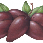 Six purple jumbo kalamata olives