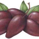 Six purple jumbo kalamata olives