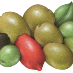 Olive Medley D'Italia with red, green, and black Cerignola, green Castellavetrano, California Sicillian, and Giarraffa olives.