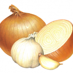 One whole yellow onion with one cut half, and one whole garlic head with one clove