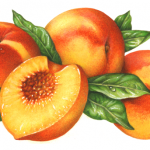Three peaches with a cut peach half and leaves