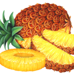 Whole pineapple with two cut slices and one cut pineapple ring