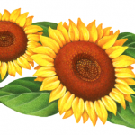 Two sunflowers with leaves