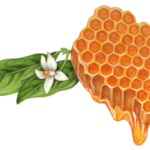 Honeycomb with dripping honey and an orange blossom and leaves.