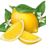 One whole lemon with two cut lemon wedges, flower blossoms and leaves.